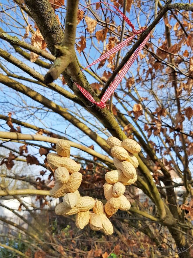 Drei (oder mehr) Nüsse für Eichhörnchen – Kleine Herzensdiebe
